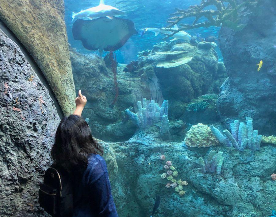 Allison Salvador '19 looks into a tank at the aquarium. Printed with permission of Allison Salvador.