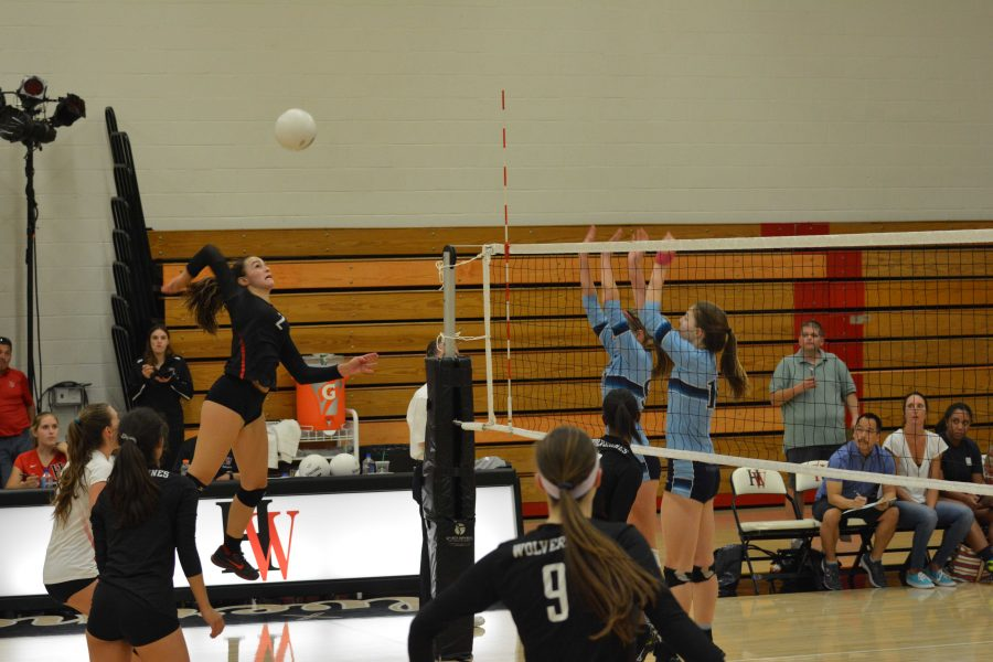 Smack Down: Bella Hedley jumps to spike the ball in the Wolverine's loss to Huntington Beach.  Credit: Dario Madyoon
