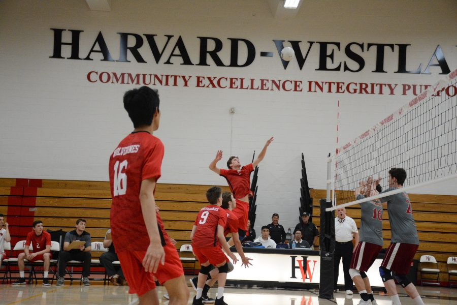 After a perfect set from Will Mallory 20, Justin Eitner 18 is in position to spike the ball. Credit: Jackie Greenberg/Chronicle